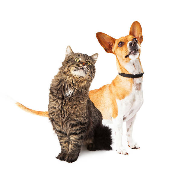 Dog And Cat Looking Up Together Poster