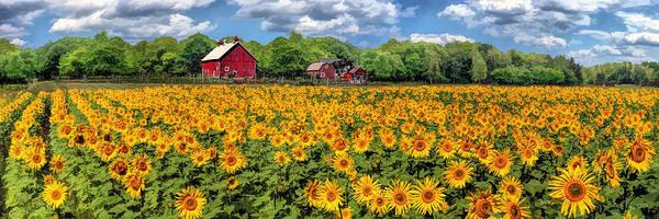 Door County Field Of Sunflowers Panorama Poster