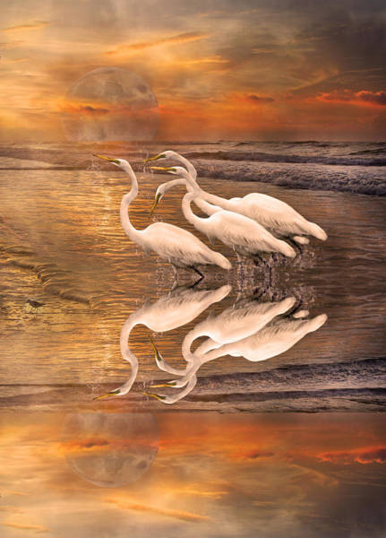 Dreaming Of Egrets By The Sea Reflection Poster