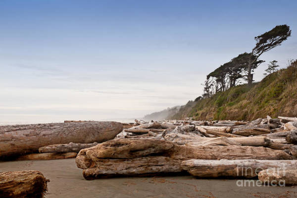 Drift Logs Tossed Like Pick-up Sticks Upon Pacific Coast Beach Poster