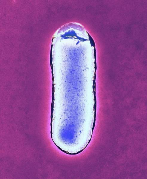 E. Coli Bacterium Poster