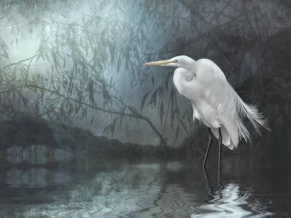 Egret In Moonlight Poster