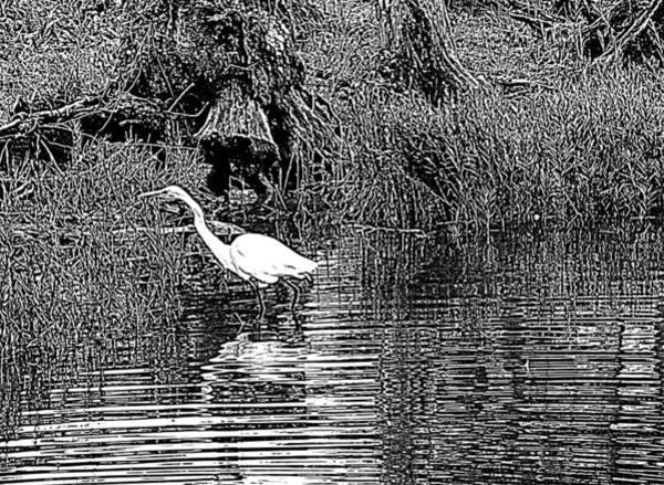 Egret On The Move Poster