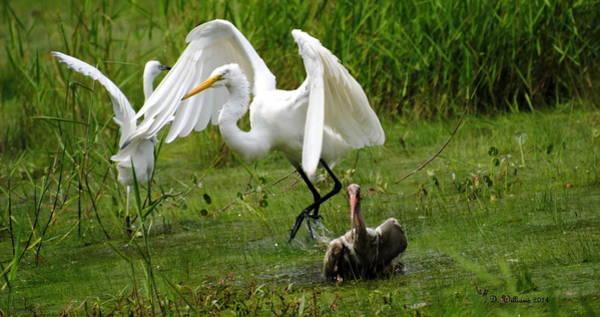 Egrets Taking Flight Poster