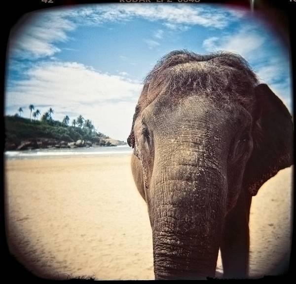 Elephant On The Beach Poster