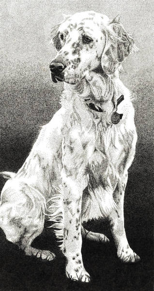 Poster featuring the drawing English Setter by Rob Christensen
