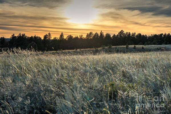 Evening Grasses In The Black Hills Poster