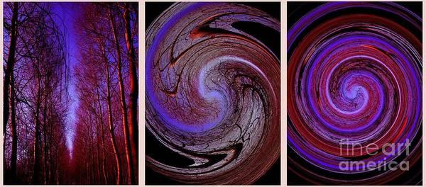 Evolution De La Foret En Spirale Poster