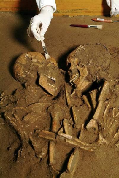 Excavating Prehistoric Skeletons Poster