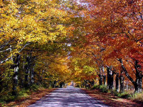 Fall Colors Near Sister Bay Poster