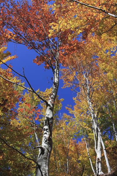 Fall Colors Rila Mountains Bulgaria  Poster
