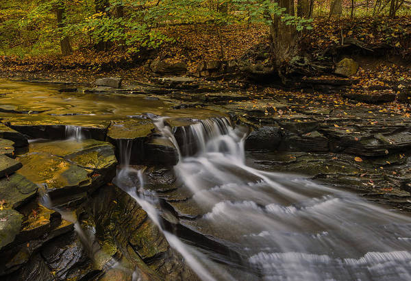 Fall In The Metroparks Poster
