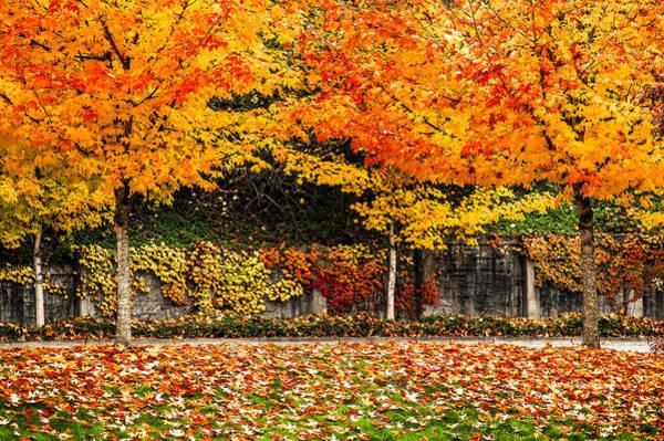 Autumnl Rainbow Poster