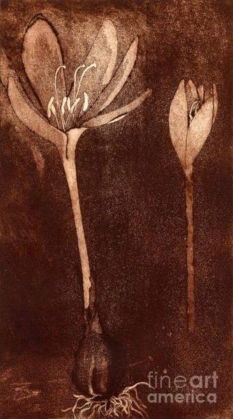 Fall Time - Autumn Crocus Meadow Safran Poster