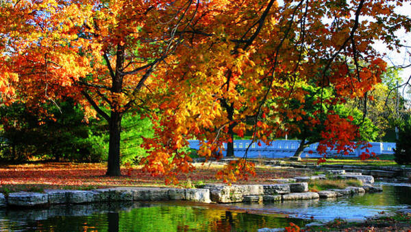 Fall Trees Landscape Stream Poster
