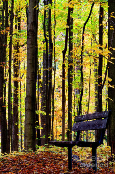 Fall Woods In Michigan Poster