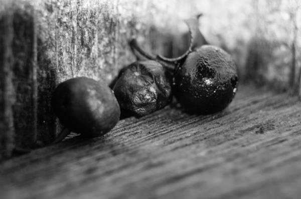 Fallen Berries Poster