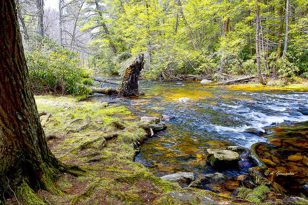 Fallen Tree In Stream Pocono Mountains Poster