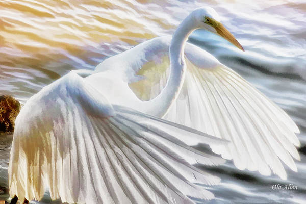 Fancy Wing Dancer  Poster