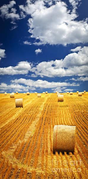 Farm Field With Hay Bales In Saskatchewan Poster