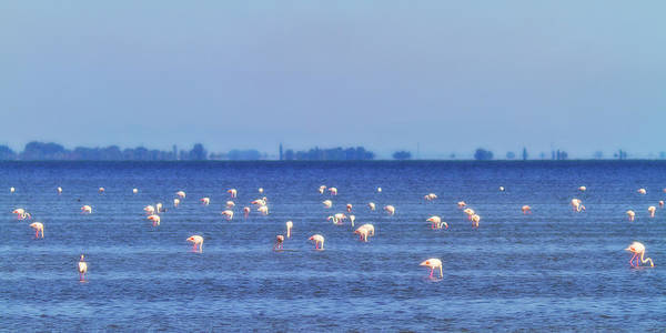 Flamingos In The Pond Poster