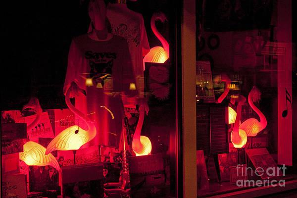 Flamingos On Market Street Poster