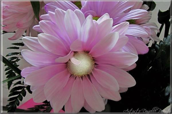 Florescence In Lavender Pink Poster
