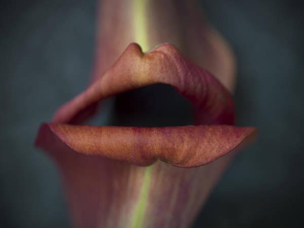 Flower #295 Poster