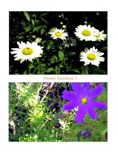 Flower Gardens A Poster