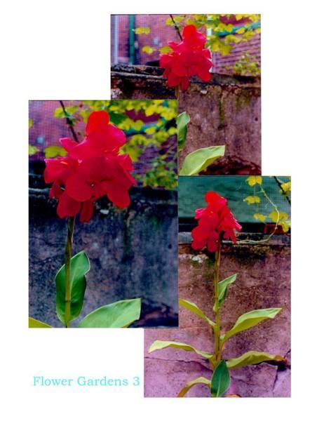 Flower Gardens C Poster