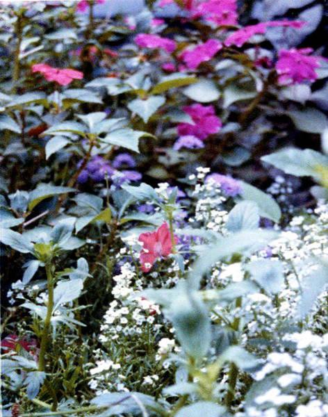 Flower Variety Garden Poster