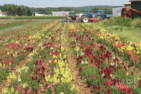 Flowers On The Farm-1 Poster