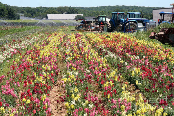 Flowers On The Farm-2 Poster