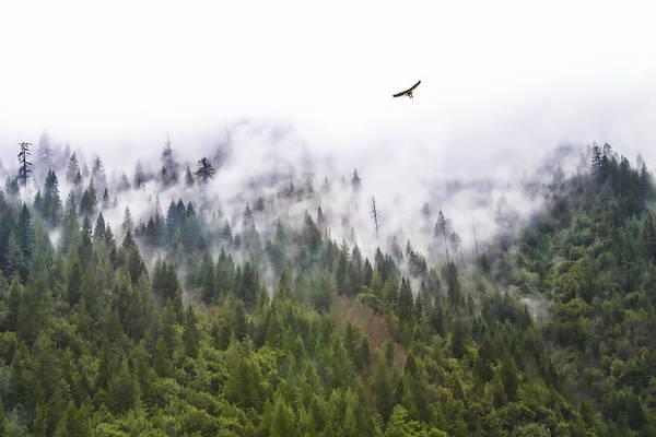 Foggy Mountain Poster