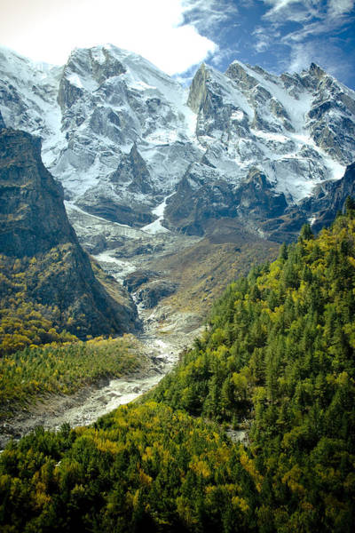Forest And Mountains In Himalayas Poster