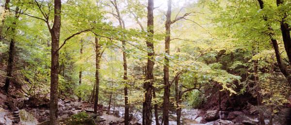 Forest, Kaaterskill Falls, Catskill Poster