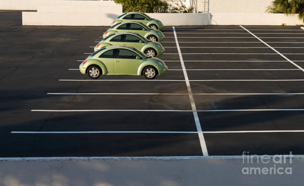 Four Green Beetles Poster