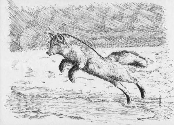 Fox Leaping River Poster