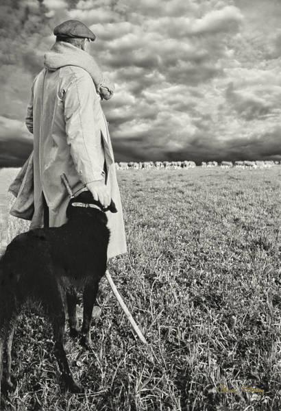 French Shepherd - B W Poster