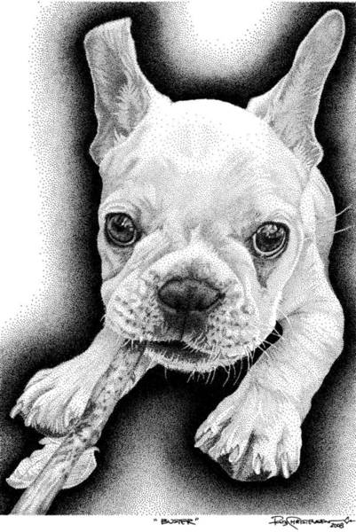 Poster featuring the drawing Frenchie by Rob Christensen
