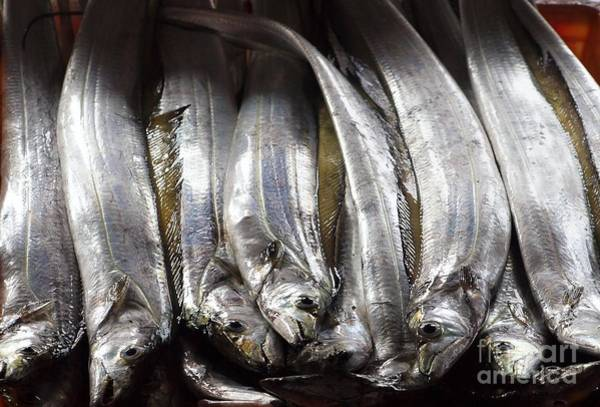 Fresh Ribbonfish For Sale In Taiwan Poster