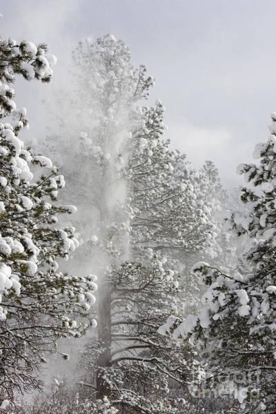 Fresh Snow Poster