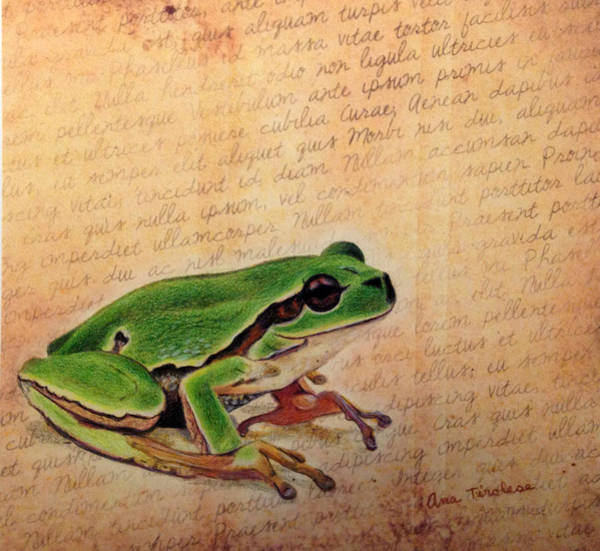 Frog On Paper Poster