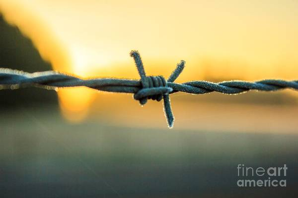 Frost On Barbed Wire At Sunrise Poster