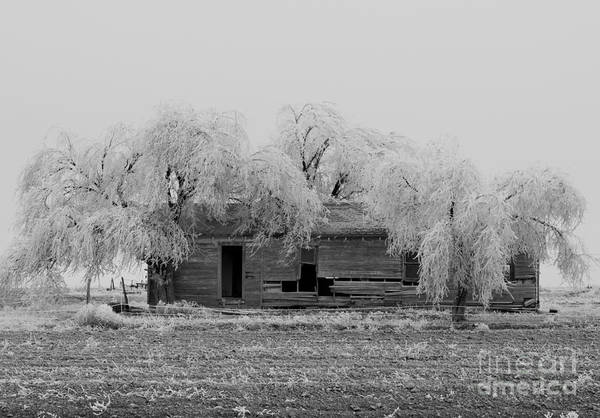 Poster featuring the photograph Frozen Trees In Black And White by Mae Wertz