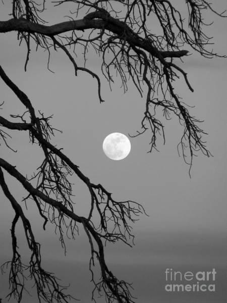 Full Moon Old Snag Poster