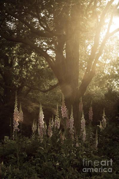 Garden Light Poster