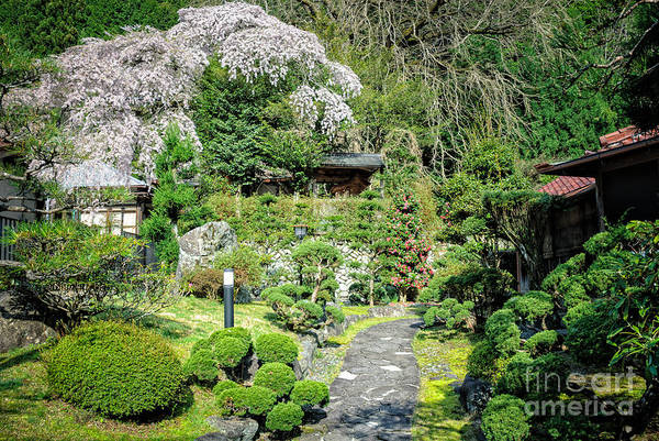 Garden Of A Japanese Ryokan With Sakura - Cherry Blossom Poster