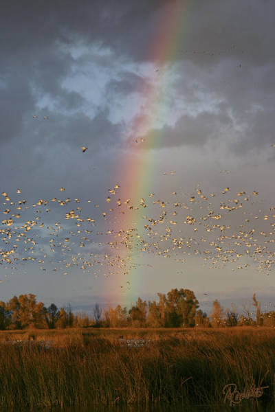 Geese And Rainbow Poster