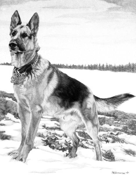 Poster featuring the drawing German Shepherd by Rob Christensen